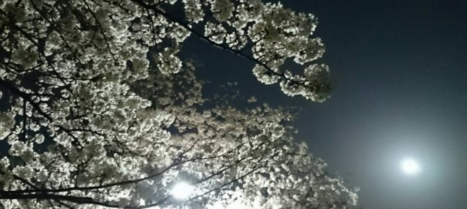 夜桜&朝桜