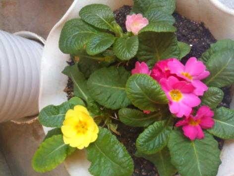お店のお花たち