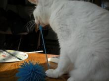 ア クールのブログ-猫 ナナ