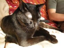 ア クールのブログ-黒猫 クロ 朝日