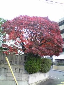 JR芦屋 美容室&アロマ・フェイシャル・リラクゼーションサロン ア クール-111210_075442.jpg