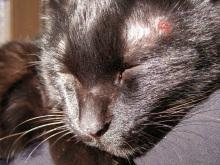 JR芦屋 美容室&アロマ・フェイシャル・リラクゼーションサロン ア クール-黒猫 クロ