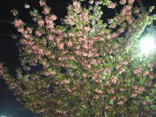 アロマ香るJR芦屋の美容室&アロマ・フェイシャル・リラクゼーションサロン ア クール-八重桜