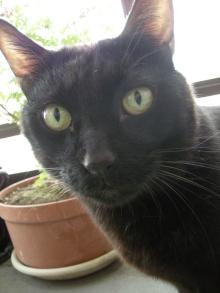アロマ香るJR芦屋の美容室&アロマ・フェイシャル・リラクゼーションサロン ア クール-黒猫 クロ