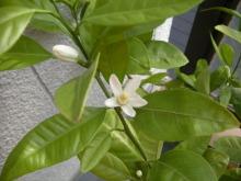 アロマ香るJR芦屋の美容室&アロマ・フェイシャル・リラクゼーションサロン ア クール-オレンジの花