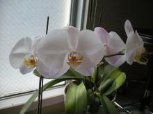 アロマ香るJR芦屋の美容室&アロマ・フェイシャル・リラクゼーションサロン ア クール-蘭の花