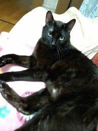 黒猫のクロ