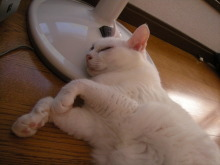 アロマ香るJR芦屋の美容室&アロマ・フェイシャル・リラクゼーションサロン ア クール