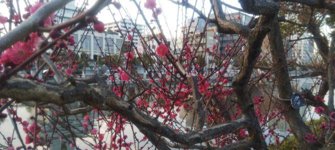 身体が感じる春