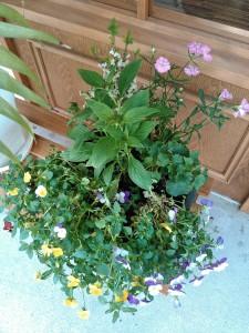 美容室 花植え替え