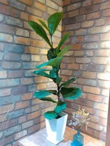 美容室 観葉植物